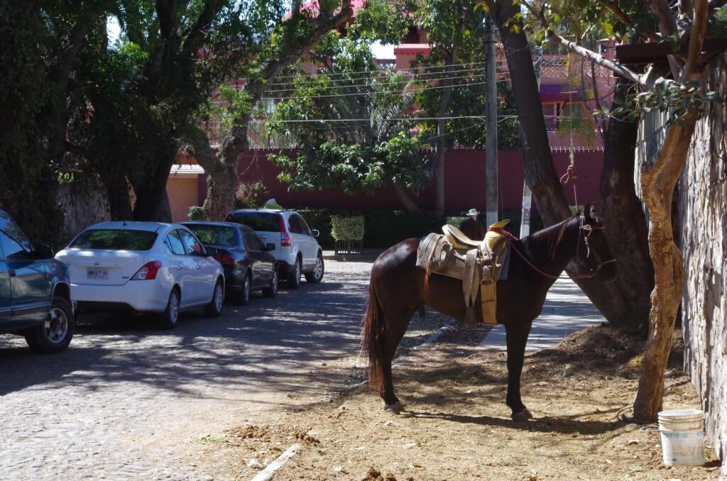 horse in Ajijic on lakesidetable