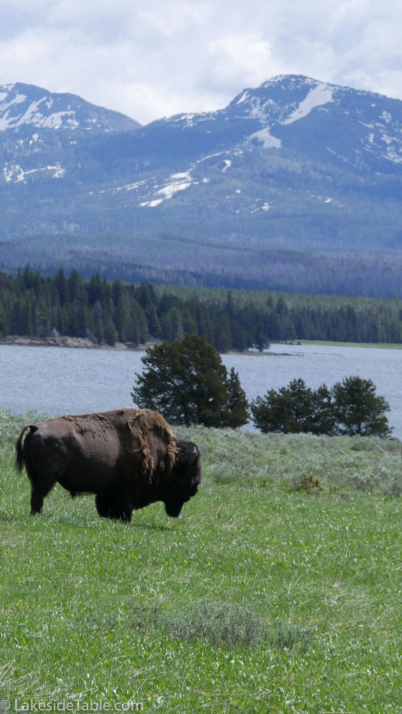 Bison and Mountains of Yellowstone National Park   www.lakesidetable.com