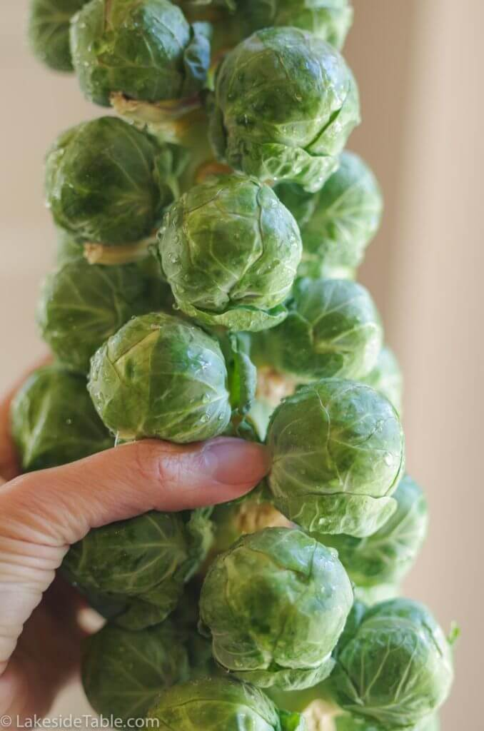 hand-with-brussels-sprouts-recipe2