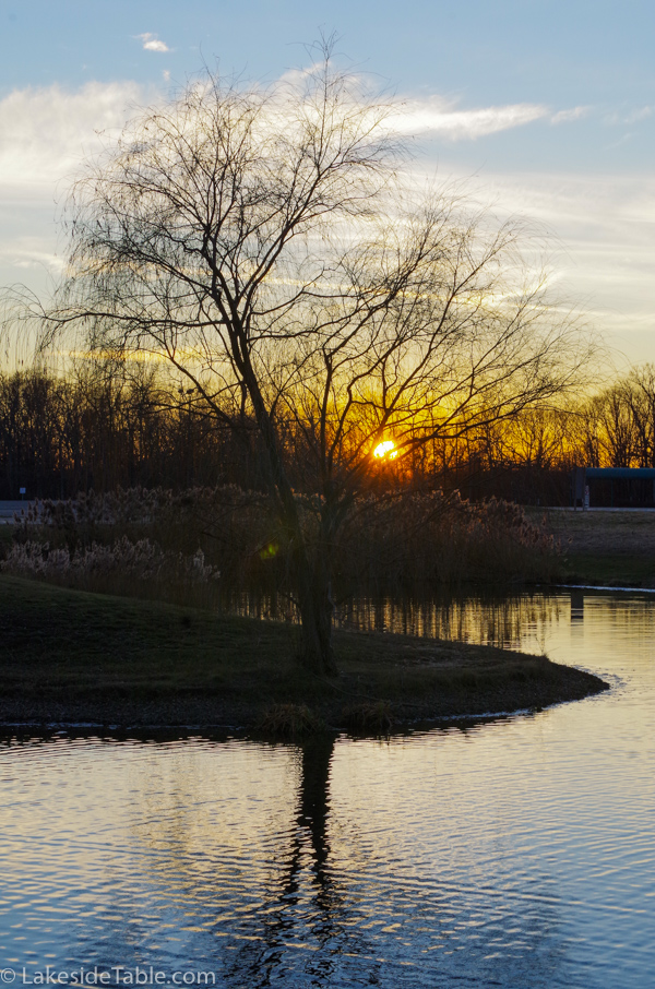 sun setting behind a leafless tree on a pond